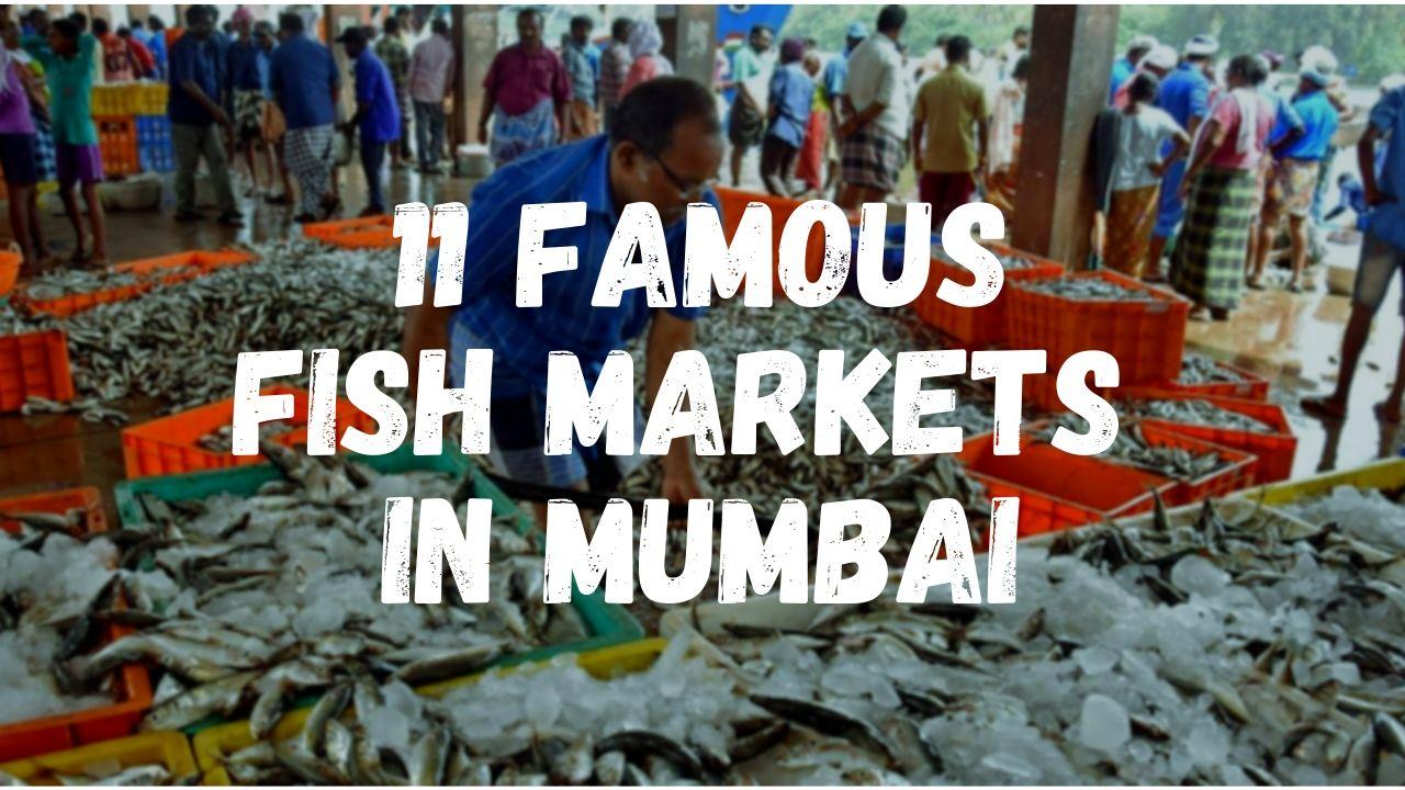 11 Famous Fish Market in Mumbai